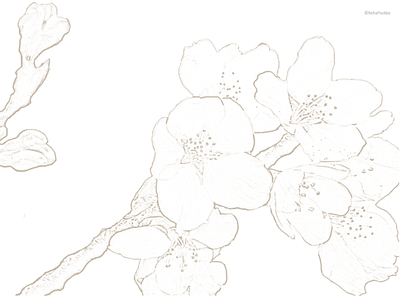 桜の花と蕾 | 塗り絵イメージ