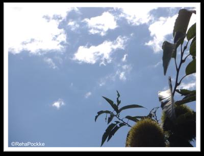 初秋の栗と青空 | 画像イメージ