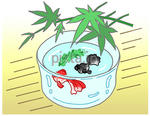 暑中見舞い用イラスト・素材 「金魚鉢」