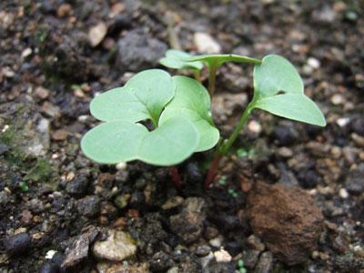葉っぱ作りはマンネリ化していたモンでして。