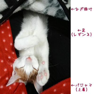 yorito69.jpg