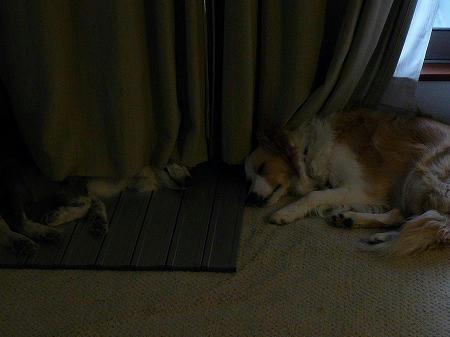 今日は2人とも夕方には、こんな状態でお疲れのようです