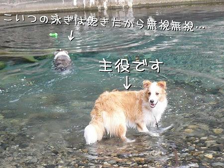 みいりは勝手に泳いでてください