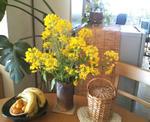 03/30菜の花