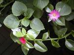 07/30小さな花