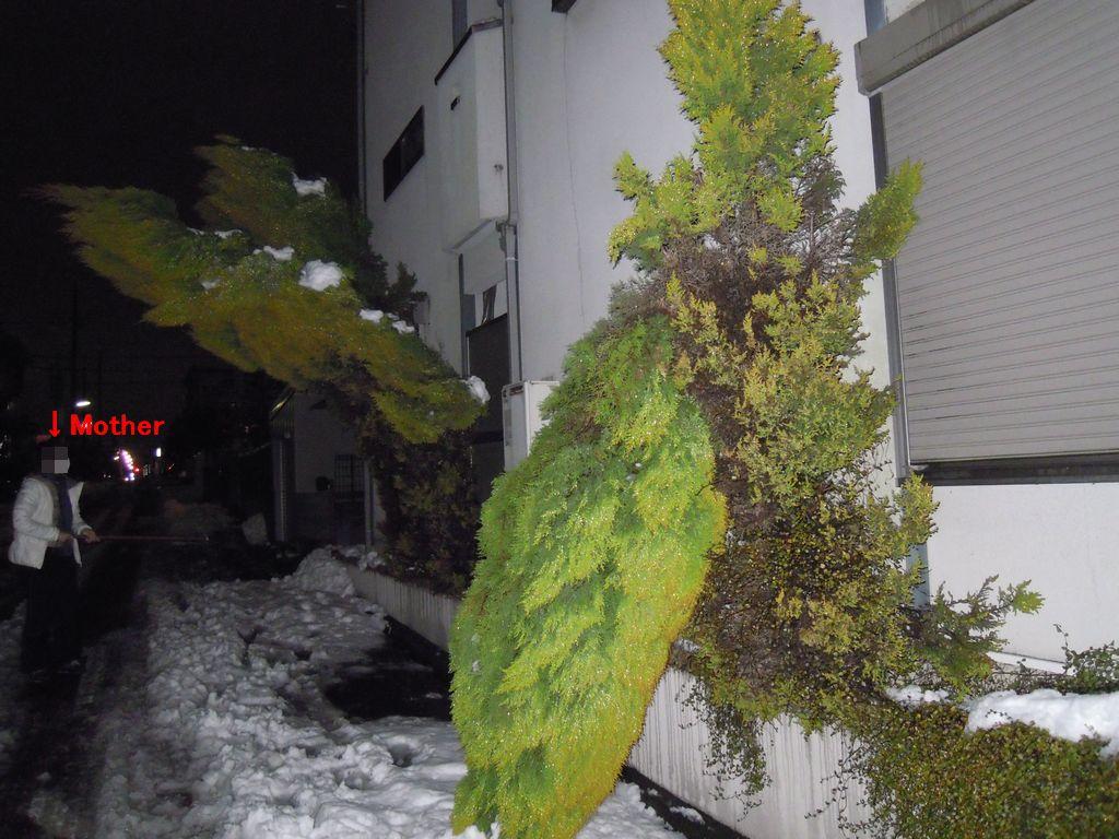2012_02_29_20-49-18_DSCN5101.JPG