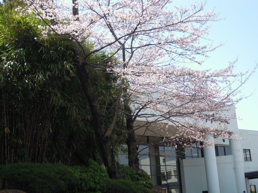 2012_04_05_12-49-12_DSCN5229.JPG