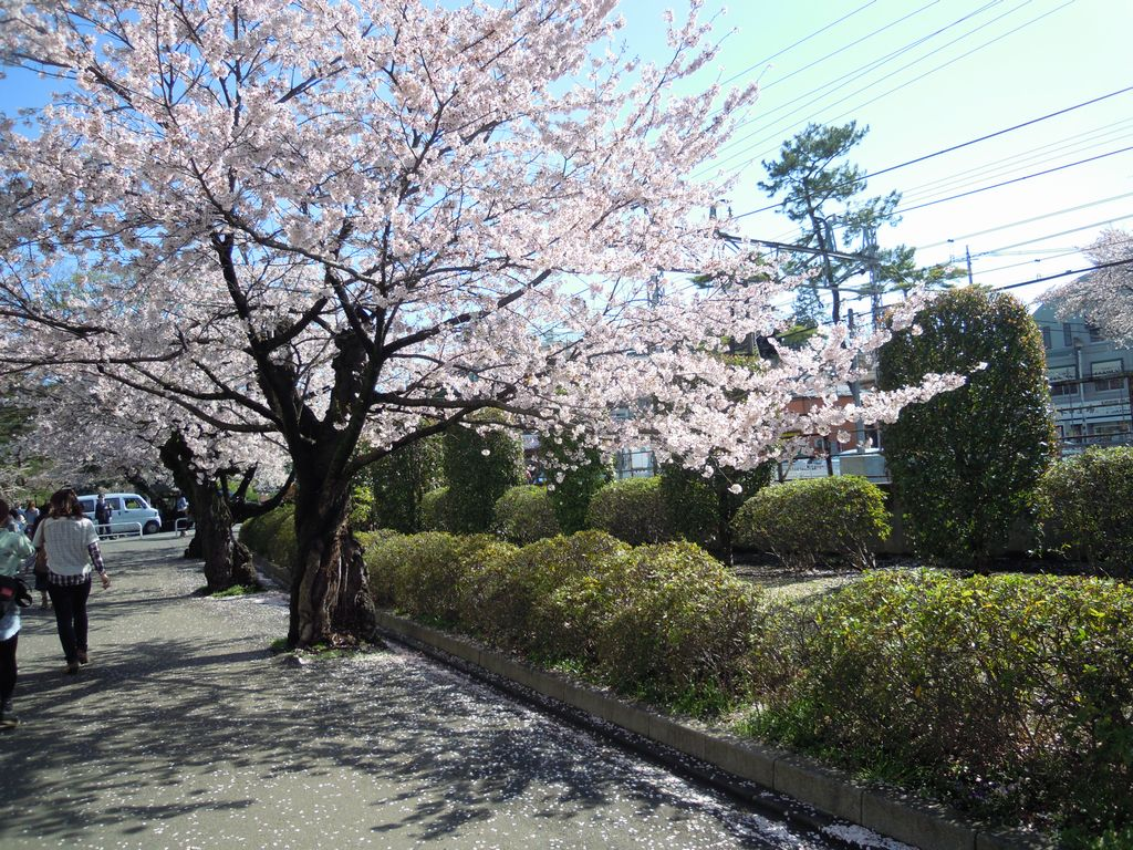 2012_04_12_08-34-12_DSCN5282.JPG