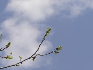 青空に芽吹き
