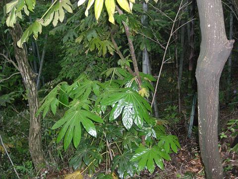 町の中のジャングル