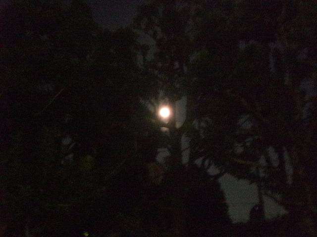 木の間越しの満月