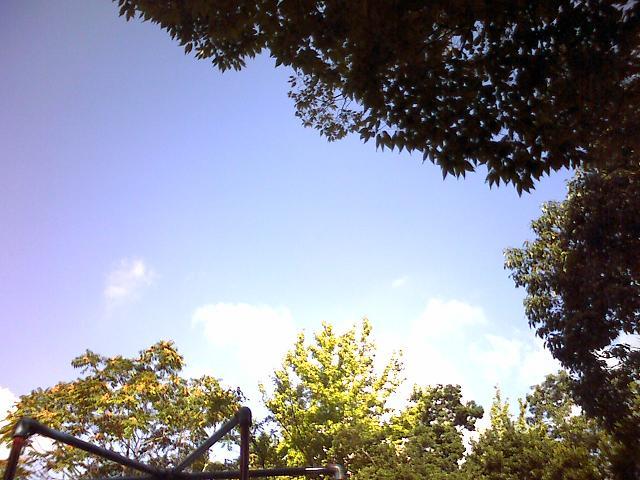 木の間越しの秋