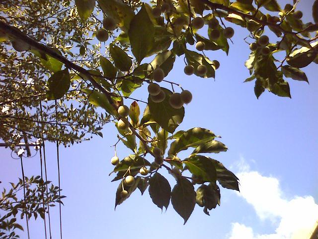 茂った木の実