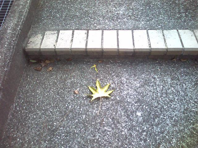 階段に落ち葉