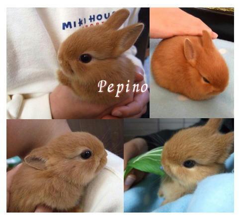 pepino-1-28.jpg
