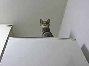冷蔵庫の上のなぁな。