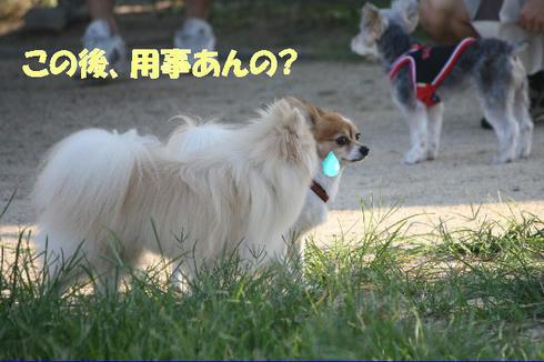 IMG_4816.JPG