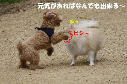IMG_8040.JPG