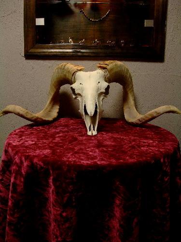 黄金に輝く雄羊の頭骨がカッコイイ!
