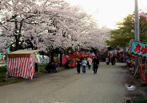 広い敷地内には沢山の桜が咲いていました。