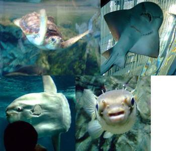 水族館「海響館」