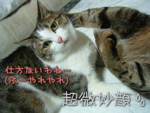 超微妙顔Σ(´д`ノ)ノ