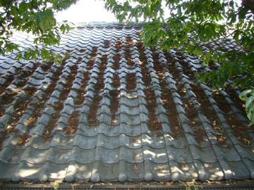 掃除前の屋根
