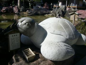 大師亀in金剛福寺