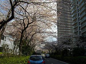 002sakura.jpg