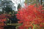 平成20年晩秋の紅葉
