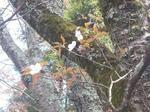 伊太祁曽神社の桜