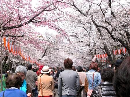 上野でお花見散歩