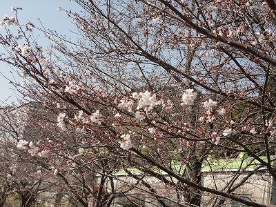 http://file.teamichiba.blog.shinobi.jp/0cc5d2ea.jpeg