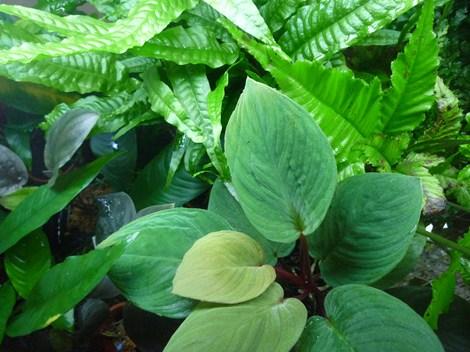 テラリウム用植物1