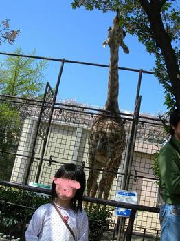 動物園キリン