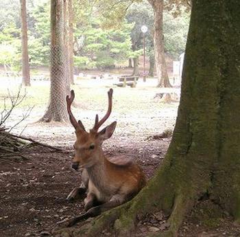 まったり鹿。