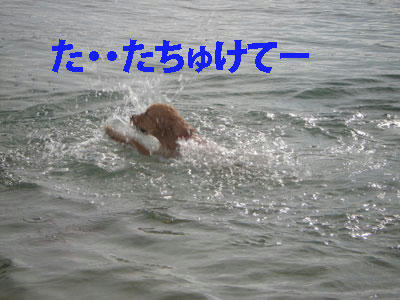 run339.jpg
