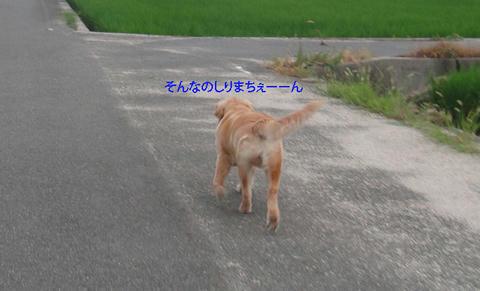 run599.jpg