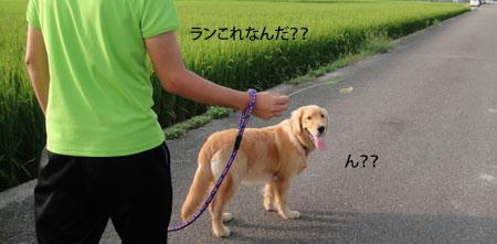 run698.jpg