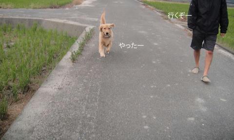 run1113.jpg