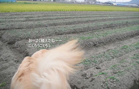 run1284.jpg