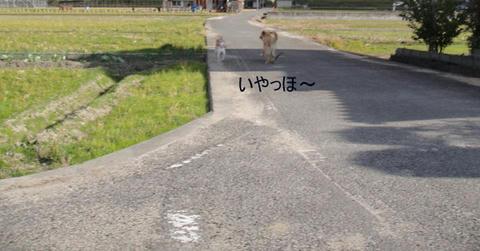 run1433.jpg