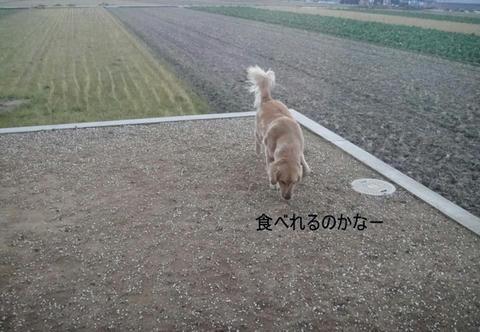 run1477.jpg