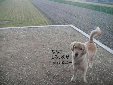 run1476.jpg