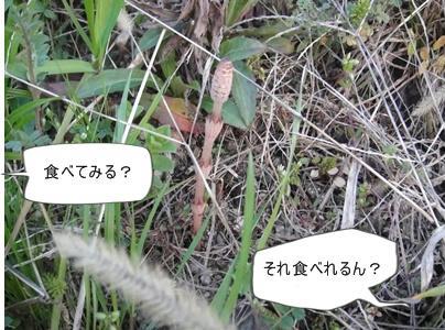 run0317-7.JPG
