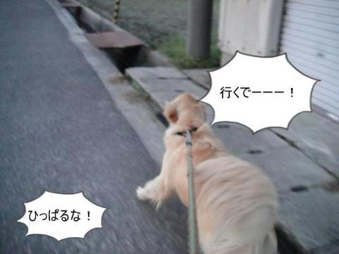 run0413-3.JPG