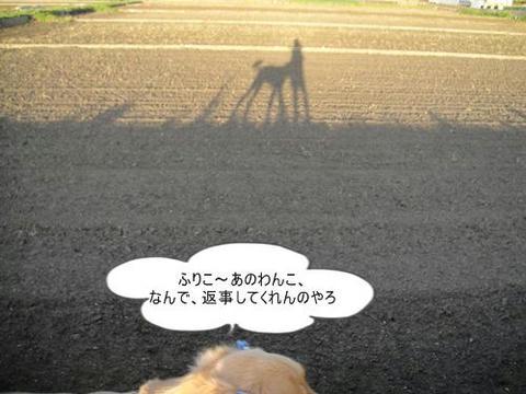 run0526-3.JPG
