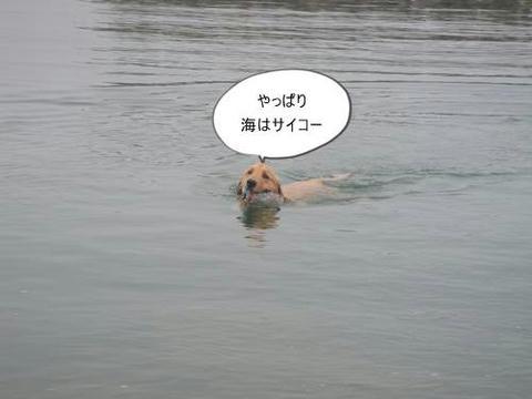 run0620-1.JPG