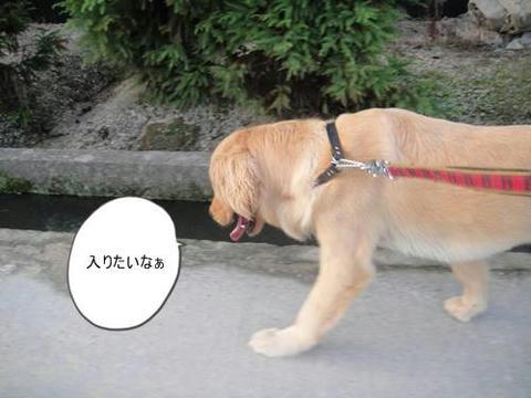 run0630-3.JPG