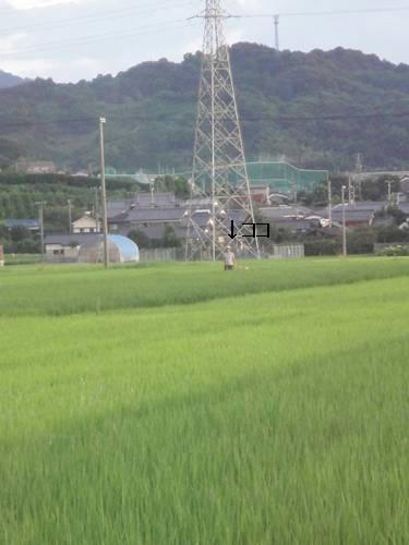 run0807-2.JPG